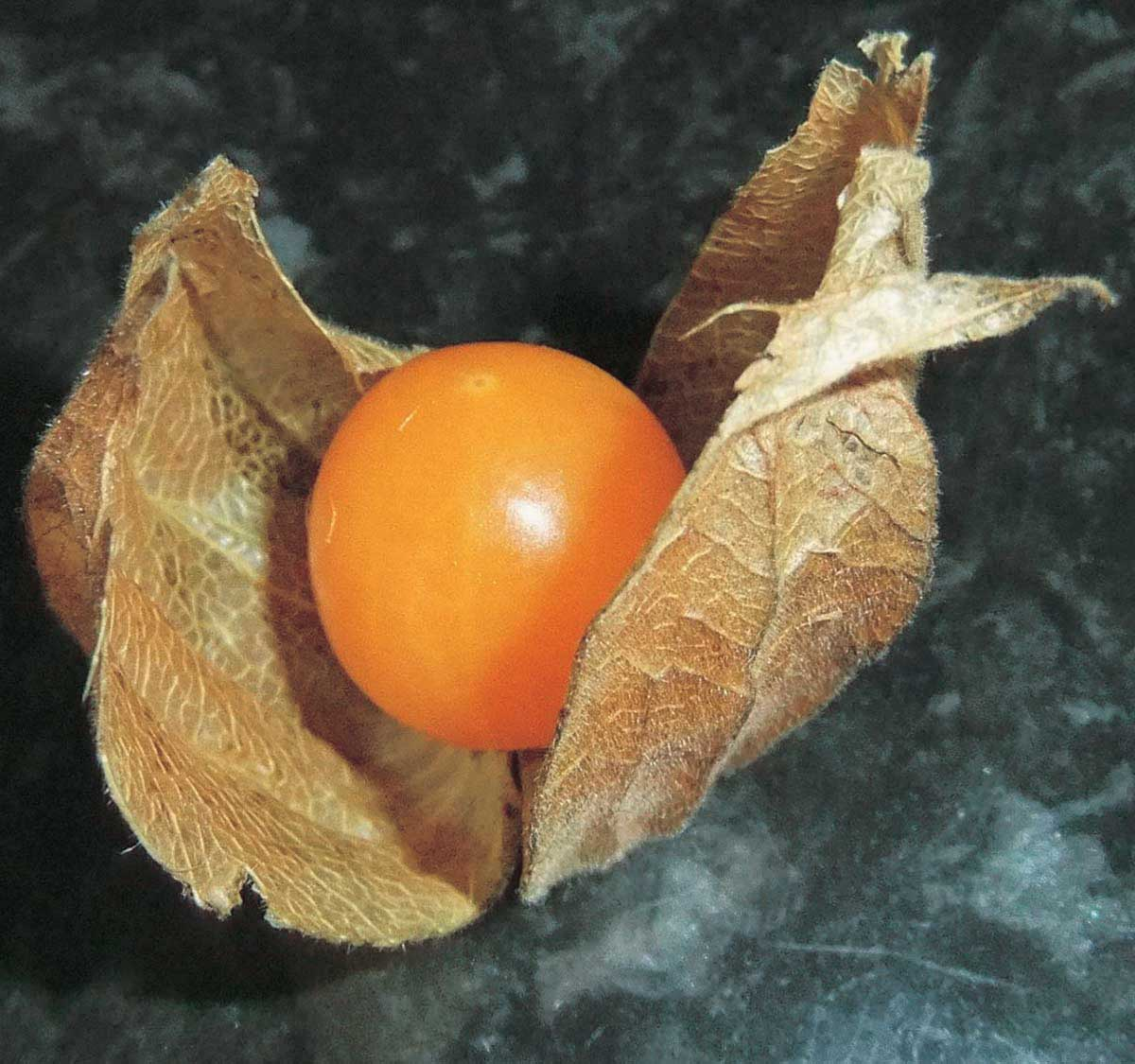 Cape Gooseberry - Qty. msd