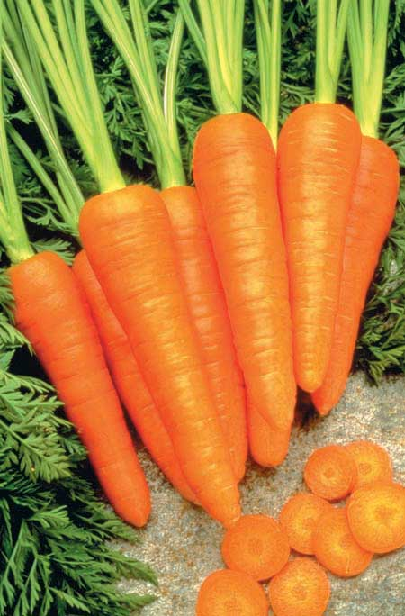 Carrot Healthmaster - Qty. msd